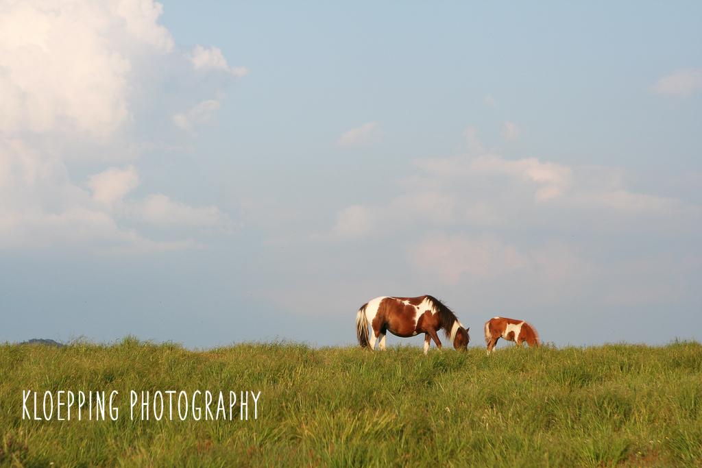 Mt. Rogers Wild Horses